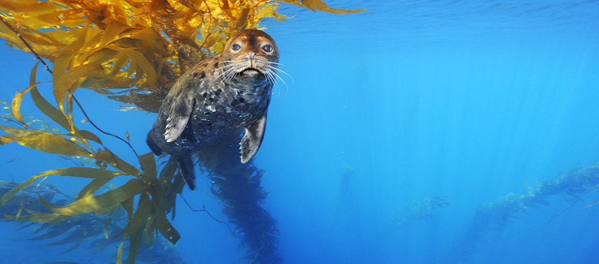 Brian Skerry Sea Lion